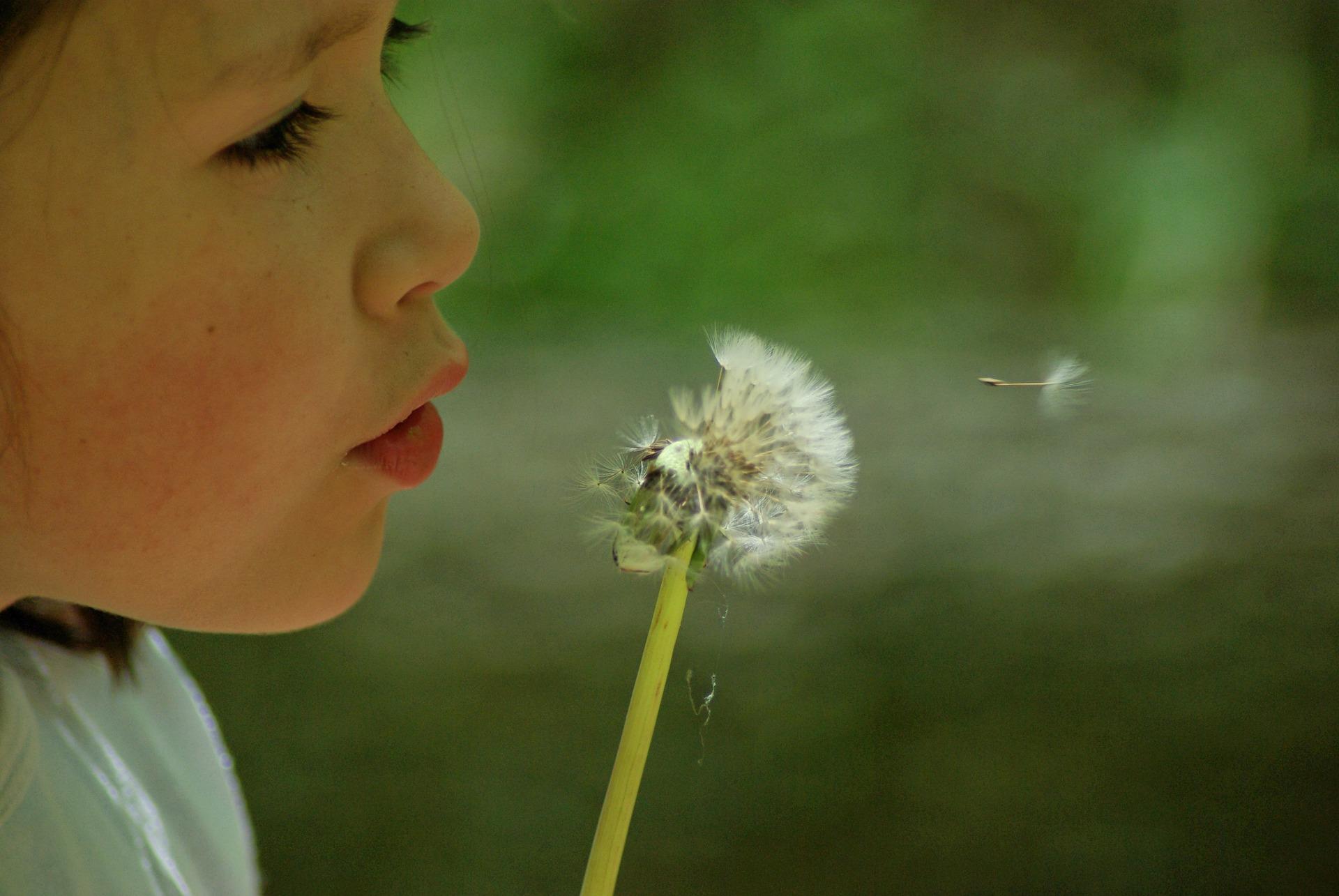 ett barn som blåser på en maskros