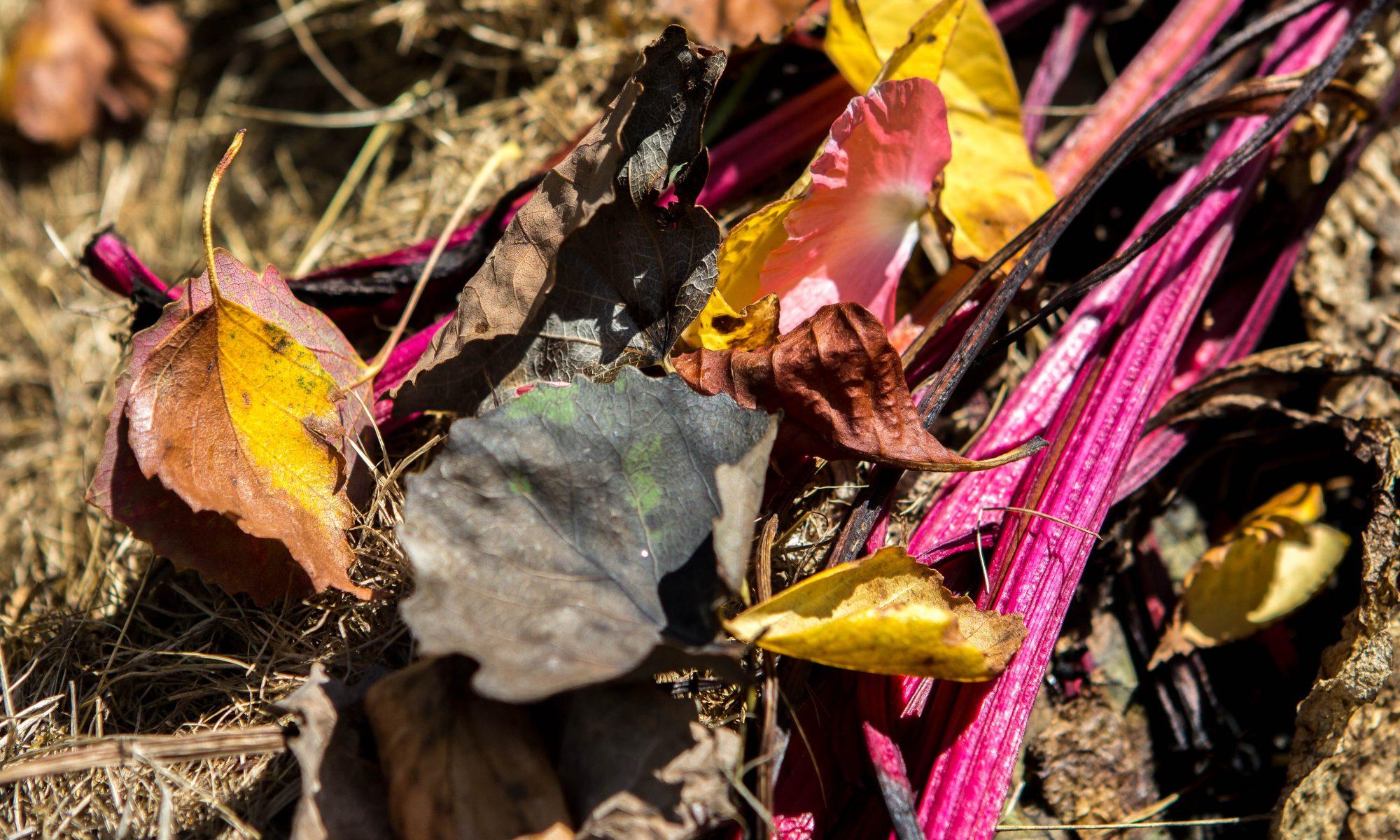 kompost med fin färg
